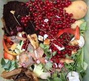 新鲜的有机垃圾用在一个小塑料桶的红浆果回收的 免版税库存照片