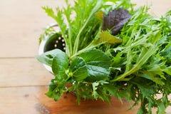 新鲜的有机混合沙拉新的庄稼离开与mizuna、莴苣、pakchoi、tatsoi、无头甘蓝、菠菜和叶芥菜 免版税库存图片