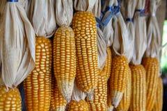 新鲜的有机玉米 甜玉米显示 库存图片