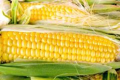 新鲜的有机玉米 库存图片