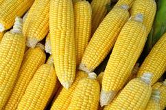 新鲜的有机玉米 免版税图库摄影
