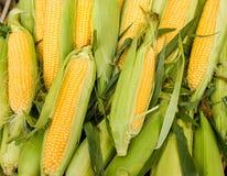 新鲜的有机玉米 免版税库存图片