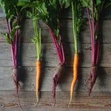 新鲜的有机甜菜和红萝卜在土气木背景,健康生活方式,秋天收获,未加工的蔬菜,顶视图 免版税库存照片