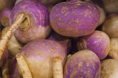 新鲜的有机白萝卜在Vancouvers Grandville海岛市场上做充满活力的颜色 免版税库存图片