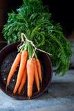 新鲜的有机红萝卜 图库摄影