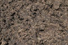 新鲜的有机肥料特写镜头 免版税库存图片