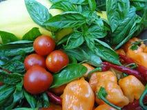 新鲜的有机菜和草本 免版税库存图片
