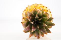 新鲜的有机菠萝 库存图片