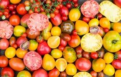 新鲜的有机蕃茄 五颜六色的蕃茄背景 库存照片