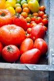 新鲜的有机蕃茄 图库摄影