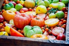 新鲜的有机蕃茄 免版税库存图片