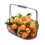 新鲜的有机蜜桔果子 免版税库存图片
