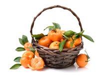 新鲜的有机蜜桔果子 库存照片