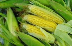 新鲜的有机黄色甜玉米 免版税库存照片
