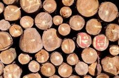 新鲜的木柴 免版税库存照片