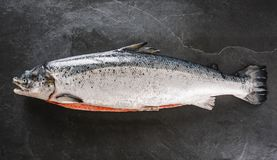 新鲜的未加工的三文鱼红色鱼用在冰的香料在黑暗的石背景 o 库存照片