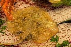 新鲜的未加工的光芒bataidea鱼Fisherman's抓住从爱琴海的 库存图片