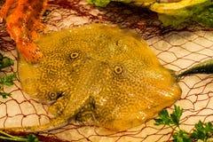 新鲜的未加工的光芒bataidea鱼Fisherman's抓住从爱琴海的 免版税图库摄影