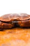 新鲜的未加工的可食的棕色海螃蟹。关闭。 库存照片