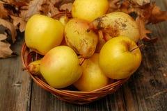 新鲜的未加工的有机梨和苹果 免版税库存照片