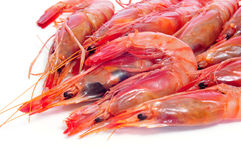 新鲜的未加工的虾 免版税库存图片