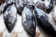 新鲜的未加工的金枪鱼在市场上 免版税库存照片