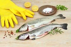 新鲜的未加工的鳟鱼鱼用香料和烹调的橡胶手套在木桌上 免版税图库摄影