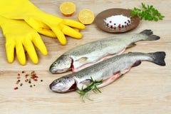 新鲜的未加工的鳟鱼鱼用香料和烹调的橡胶手套在木桌上 免版税库存照片