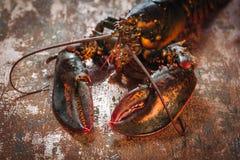 新鲜的未加工的龙虾 免版税库存图片