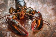 新鲜的未加工的龙虾 免版税图库摄影