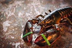 新鲜的未加工的龙虾 库存照片