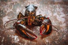 新鲜的未加工的龙虾 库存图片