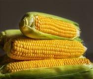 新鲜的未煮过的玉米 库存图片