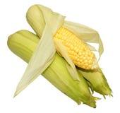 新鲜的未煮过的甜玉米玉米棒 库存图片