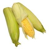 新鲜的未煮过的甜玉米玉米棒 免版税库存图片