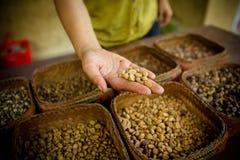 新鲜的未经焙烧的咖啡豆 库存照片