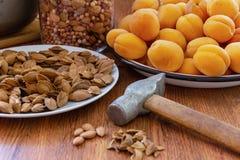 新鲜的杏子、锤子和杏子坑 图库摄影