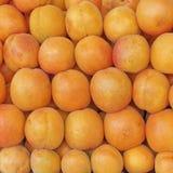 新鲜的杏子待售特写镜头 免版税图库摄影