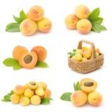 新鲜的杏子果子的收集 图库摄影