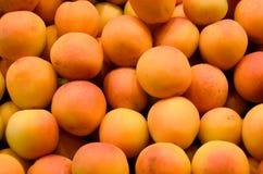新鲜的杏子 库存照片