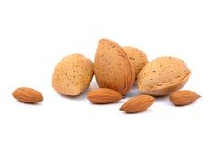 新鲜的杏仁堆在壳的 免版税库存照片