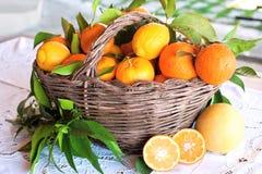 新鲜的柑橘篮子  免版税图库摄影