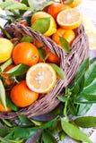 新鲜的柑橘篮子  库存照片