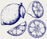 新鲜的柠檬 乱画样式 免版税库存图片
