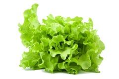 新鲜的查出的莴苣沙拉 免版税库存图片