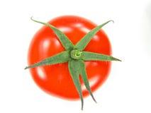 新鲜的查出的蕃茄 免版税库存照片