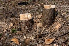 新鲜的树桩 免版税库存照片