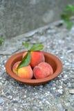 新鲜的桃子 库存照片