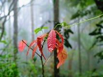 新鲜的桃红色叶子 库存照片