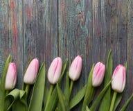 新鲜的桃红色春天郁金香边界  图库摄影